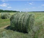 Фото в Домашние животные Товары для животных Продам сено в рулонах по 300 кг Доставка в Воронеже 1200