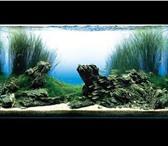 Изображение в Домашние животные Рыбки В обслуживание аквариума входит: - Запуск в Владивостоке 0