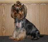 Изображение в Домашние животные Услуги для животных Услуги салона красоты для Ваших домашних в Перми 500