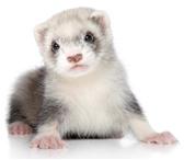 Фото в Домашние животные Услуги для животных Зоогостиница «Теремок»Если Вы уезжаете в в Астрахани 200