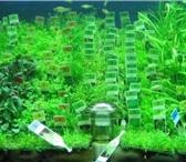 Фотография в Домашние животные Рыбки «Аквариумные растения из Европы»         в Москве 100
