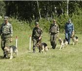 Foto в Домашние животные Услуги для животных Энгельсский клуб служебного собаководства( в Саратове 0