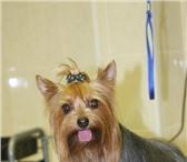 Фото в Домашние животные Услуги для животных Профессиональная стрижка собак и кошек на в Санкт-Петербурге 0
