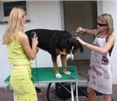 Фотография в Домашние животные Стрижка собак Стрижка и тримминг собак разных пород, любой в Самаре 800
