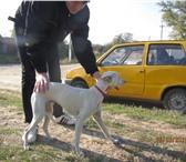 Фотография в Домашние животные Услуги для животных в районе 15 тюрьмы найден кобель уипета. в Батайске 0