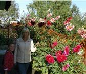Фотография в Недвижимость Сады Продам сад в отличном состоянии в р-не Широкая в Екатеринбурге 1300000