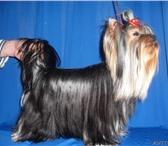 Foto в Домашние животные Услуги для животных Стоматология и парикмахерские услуги для в Хабаровске 1000