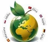 Foto в Образование Иностранные языки Мастер Инглиш проводит набор на курсы китайского, в Казани 2800