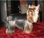 Фотография в Домашние животные Услуги для животных Стрижка собак декоративных пород . Качественно в Волгограде 500