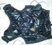 Изображение в Домашние животные Одежда для собак Новы черный комбез, легкий, теплыый, не промокаемый! в Краснодаре 600