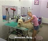 Foto в Домашние животные Стрижка собак Зоопарикмахерская Лилу, предлагает своим в Обнинске 1000