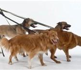 Изображение в Домашние животные Услуги для животных сли Вы не можете гулять со своим любимцем в Саратове 100