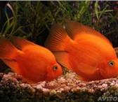 Фотография в Домашние животные Услуги для животных Обслуживание аквариумов. Оформление. Чистка. в Москве 1000