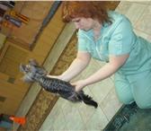 Изображение в Домашние животные Стрижка собак Выполняем домашние, гигиенические и породные в Белогорск 750
