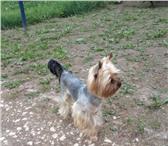 Foto в Домашние животные Вязка собак Нам 4 года 4 месяца спокойный, красивый, в Екатеринбурге 0