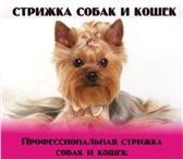 Изображение в Домашние животные Стрижка собак Уважаемые владельцы! Хочу предложить Вам в Москве 800