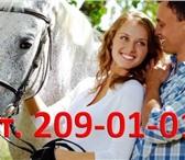 Фотография в Развлечения и досуг Другие развлечения Прогулка на лошадях - это удивительный подарок в Москве 1000