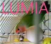 Foto в Домашние животные Птички Продам пару Розовощеких попугаев вместе с в Екатеринбурге 10000