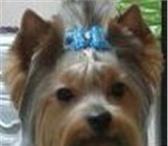 Фото в Домашние животные Стрижка собак Модельные ,гигиенические, купание, уход за в Новороссийске 0