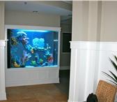 Фотография в Домашние животные Рыбки Аквариумные комплексы из акрилового стекла в Уфе 0