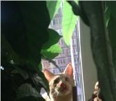 Foto в Домашние животные Потерянные Потерялся кот в г.Мытищи,  в районе 10 школы, в Мытищах 0