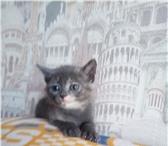Foto в ? Отдам даром-приму в дар Отдам в добрые руки красивую дымчатую кошечку в Томске 1