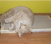 Фото в Домашние животные Товары для животных 7 причин купить когтеточку-лежанку Вашей в Костроме 300
